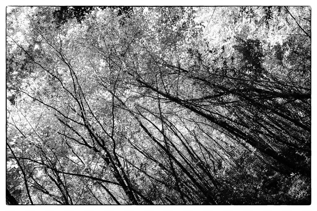 Bosco in bianco e nero