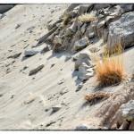 Sabbia con cespugli e rocce