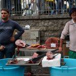 Tonno e pesce spada appena pescato