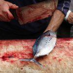 Macellazione di un pesce